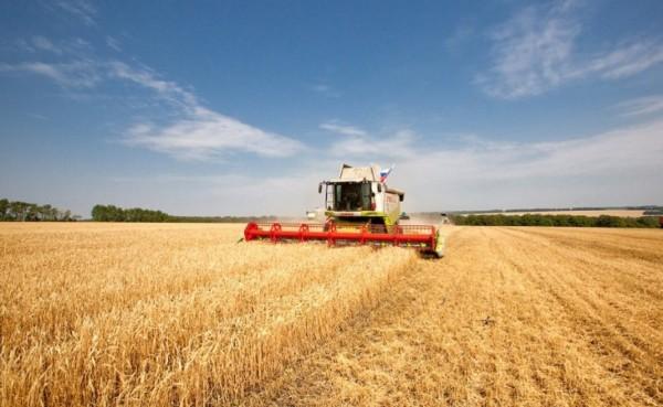 пшеница-рекорд=
