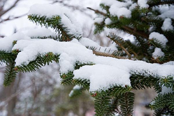 09-snow-17