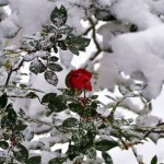 Обитатели зимнего леса в Крыму