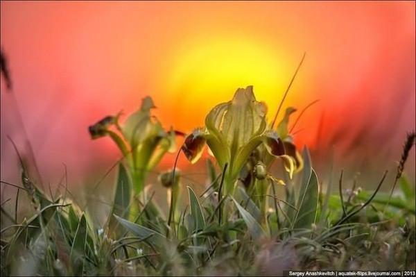 весна-Закат над Кояшским озером.-анашкевич