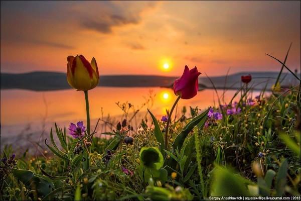 весна-Закат над Кояшским озером.-тюльпаны