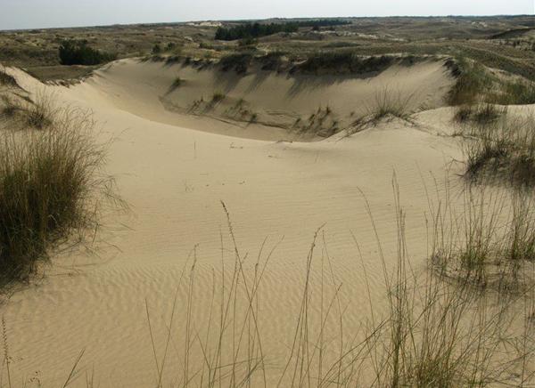 алёшковские пески- кучугуры