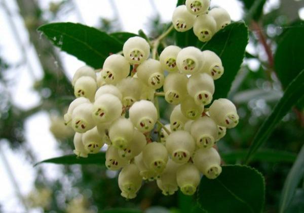 земляничн-цветы