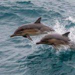 Что делать при обнаружении маленького дельфина у берега?
