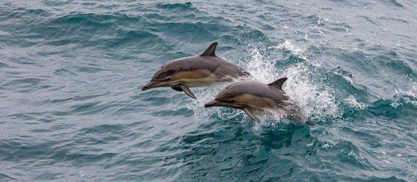 дельфины---