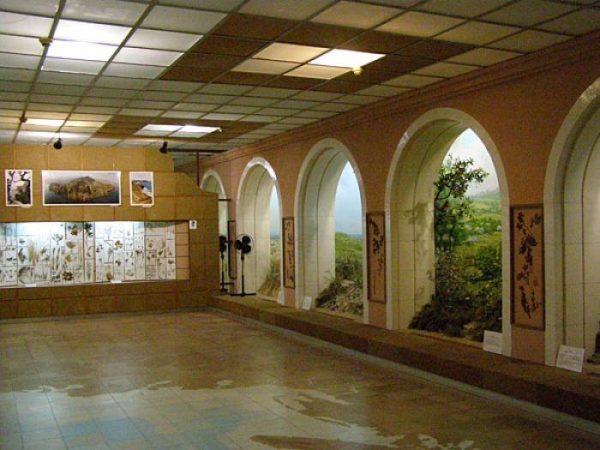 в Феодосийском музее древностей, в