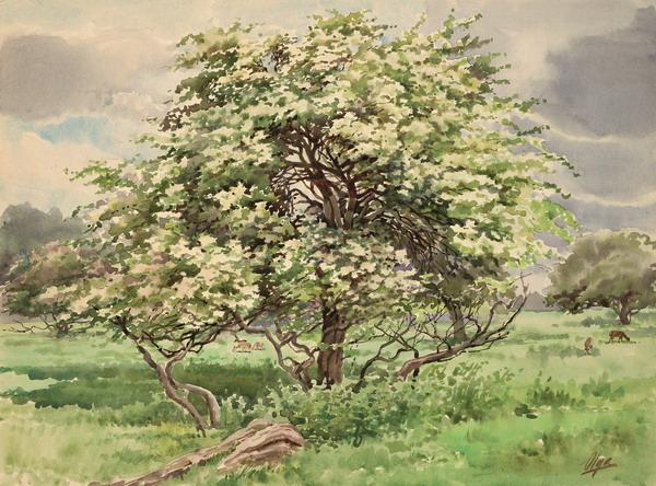 derevo-v-cvetu