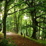 Заповедный буковый и тисовый лес Крыма