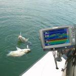 Преимущество использования эхолотов при зимней рыбалке