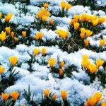 Прогноз погоды и урожая по приметам февраля