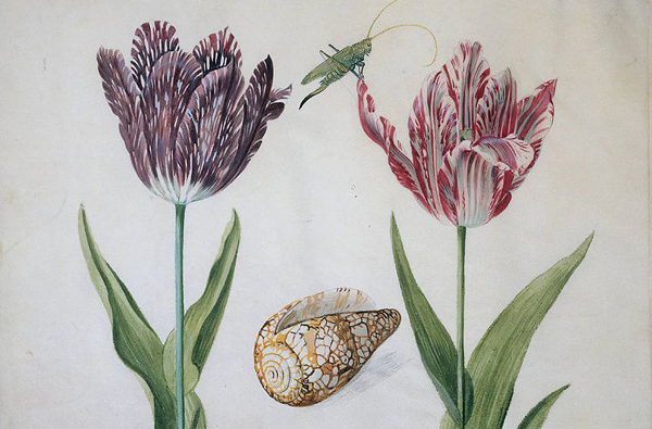 0-Пестролепестные тюльпаны 1630-х годов.