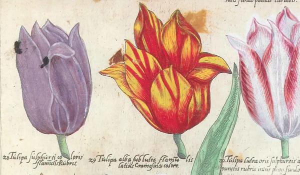 0- Tulip-1559)