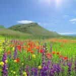 Смертельно опасные растения Крыма