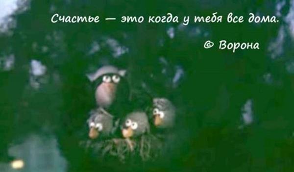 00-ворона