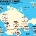 Самый разгар вылова барабули и ставриды в Крыму