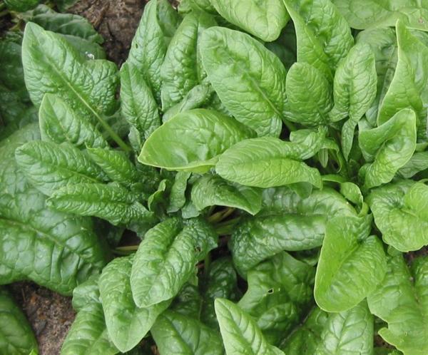 0-шпинат