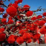 Как в Китае встретят Новый год?