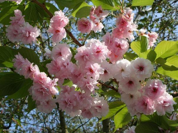 3-весна