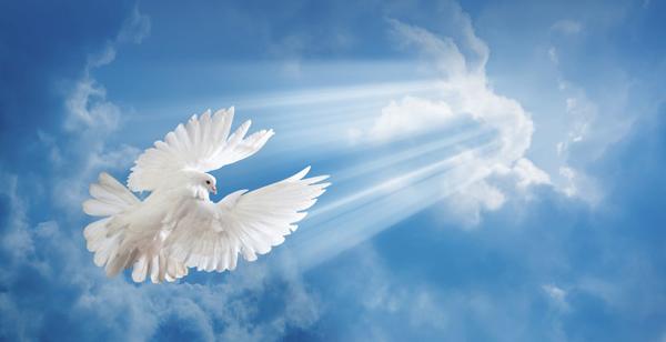 00-красивый-белый-голубь-в-небе-