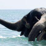 Купание слонов в Евпатории