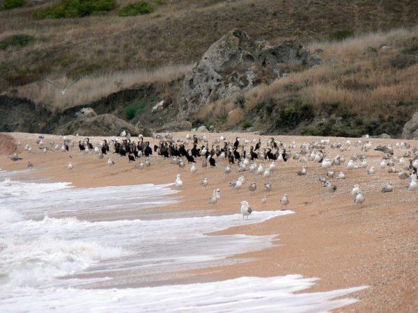 генеральская бухта-птичий пляж