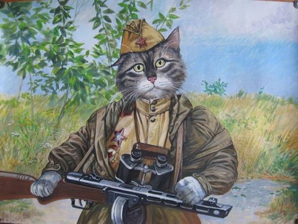 кот-боец