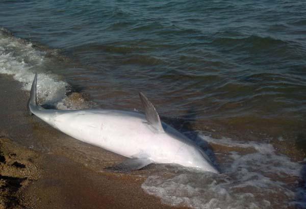 0-дельфин