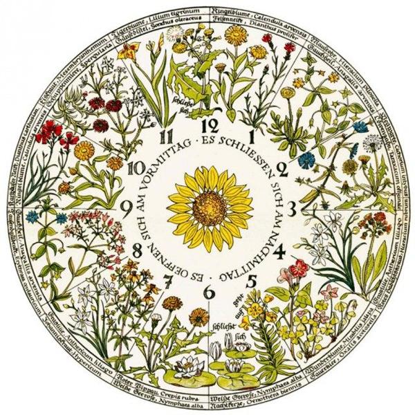 -Цветочные часы Карла Линнея