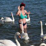 Лебеди на пляже в Евпатории