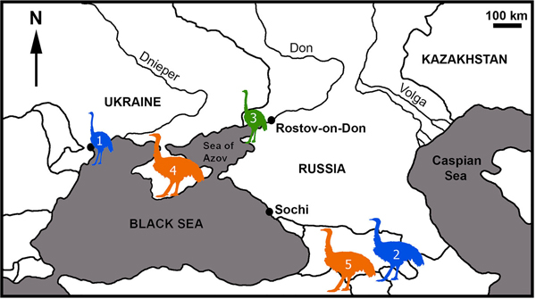 A GIANT EARLY PLEISTOCENE BIRD FROM EASTERN EUROPE