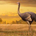 В Крыму нашли окаменелости крупнейшей птицы Северного полушария