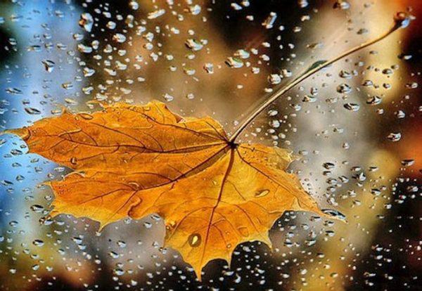 И у души бывает время листопада, и сердце знает, что такое дождь.