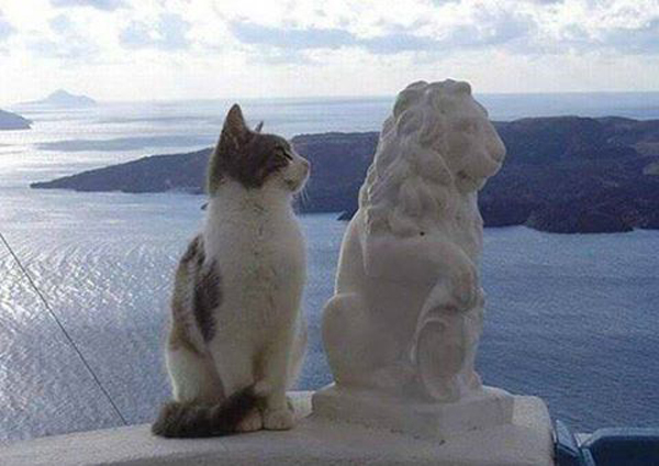 0-кот-лев