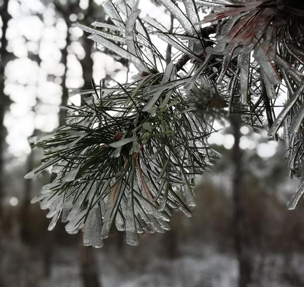 0-снег-дождь