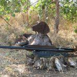 Сколько стоит охота в Крыму?
