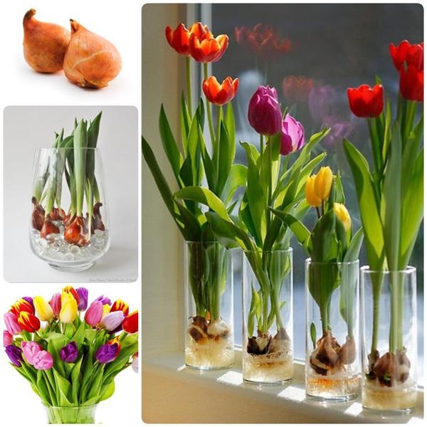 1-how-to-grow-tulips-tulips-in-vase-growing