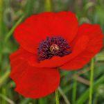 Цветочек аленький зацвёл в Крыму