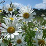 Погода и народный календарь на начало июня в Крыму