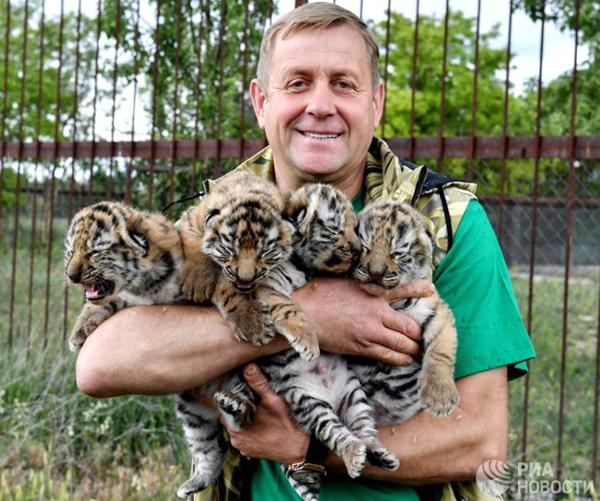 тигрята-12 июня
