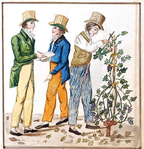 Виноградари за сбором урожая. 19 век