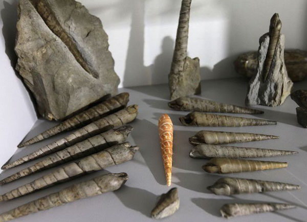 Крым 180 миллионов летд