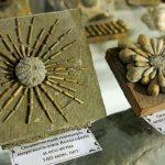 Крым 180 миллионов лет назад