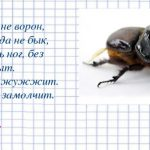 Рогатые жуки