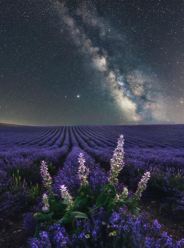 лавандовом поле ночь