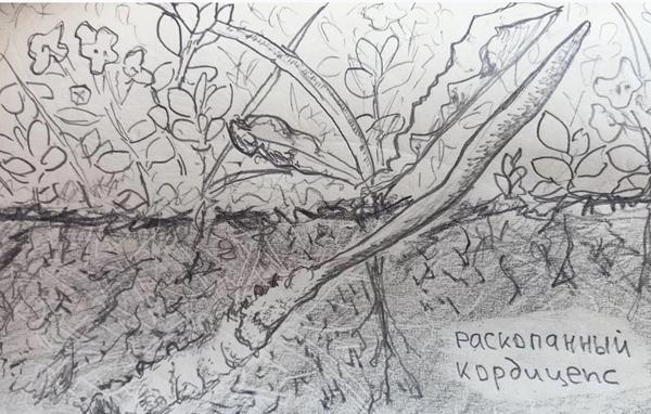 """""""Раскопанный кордицепс"""". Рисунок Михаила Вишневского."""