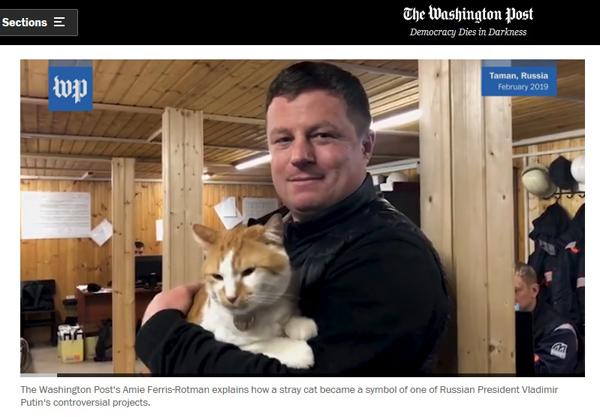 амеры- и кот
