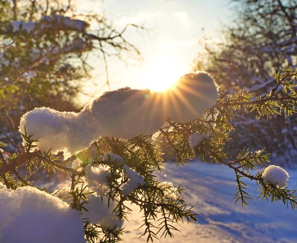 зим-солнце