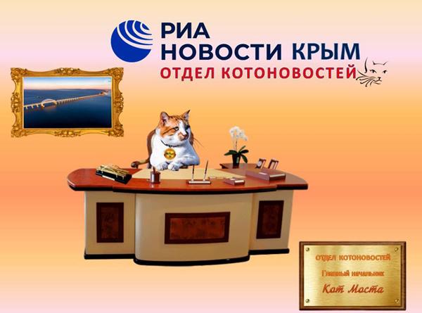 кота-новости