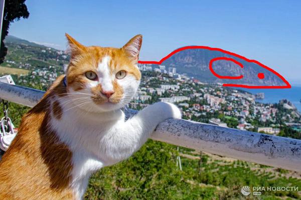 кот и мыш-гора