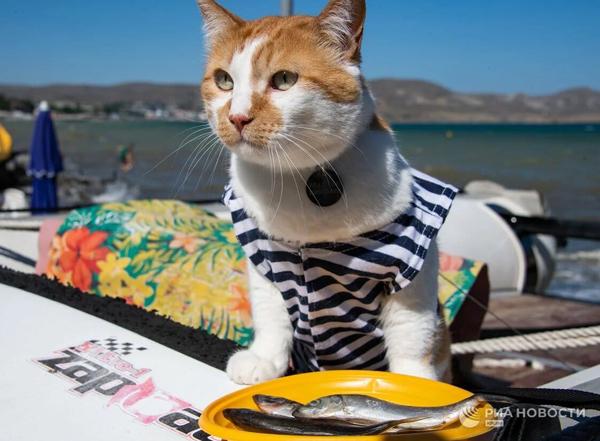 кот матрос-рыбалке